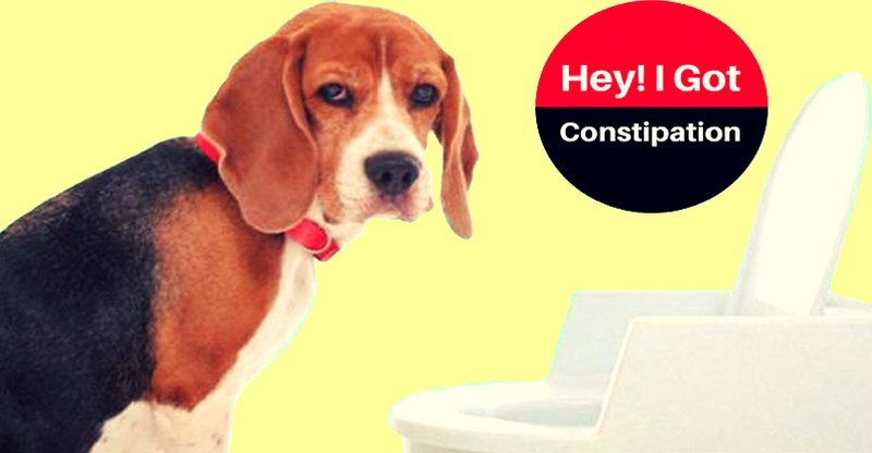 How To Help A Constipated Dog At Home